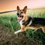 Odpravljanje neželenega vedenja pri psih in uspešno odpravljanje težav